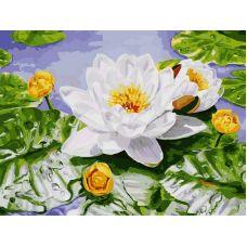 Раскраска Нимфея озерная Елены Самарской, 30x40, Белоснежка