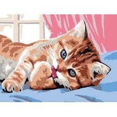 Раскраска Кот чистюля, 30x40, Белоснежка