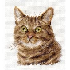 Вышивка Европейский кот, 12x11, Алиса
