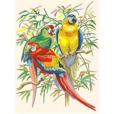 Живопись по номерам Тропические попугаи, 30x40, Белоснежка