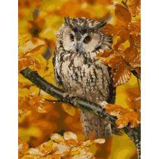 Живопись по номерам Сова в осеннем лесу, 40x50, Paintboy, GX27942