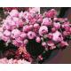 Живопись по номерам Пионы в бокале, 40x50, Hobruk, U8121