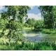 Живопись по номерам Лесное болото, 40x50, Hobruk, U8102