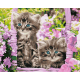 Живопись по номерам Котята в корзинке, 40x50, Hobruk, U8037