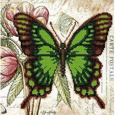 Канва с рисунком Бабочка 8, 25x25, Божья коровка
