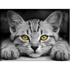Мозаика стразами Желтоглазый котёнок, 30x40, полная выкладка, Алмазная живопись