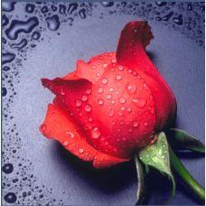 Мозаика стразами Красная роза, 22x24, полная выкладка, Алмазная живопись