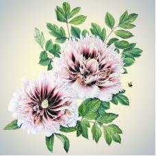 Наволочка шелковистая Цветы 1, 39x39, Матренин Посад