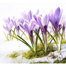Набор для вышивания бисером Песня весны, 28x34 (23x28), Матренин посад