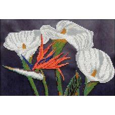 Набор для вышивания Каллы, 18x28, Вышиваем бисером