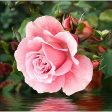 Мозаика стразами Роза у воды, 25x25, полная выкладка, Алмазная живопись