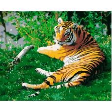 Живопись по номерам Тигр на лужайке, 40x50, Hobruk, HS0018