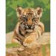 Живопись по номерам Тигрёнок, 40x50, Hobruk, U8109