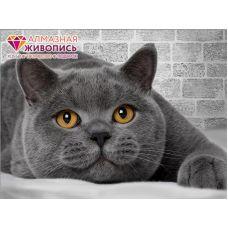 Мозаика стразами Британский кот, 30x40, полная выкладка, Алмазная живопись