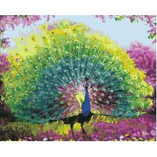 Живопись по номерам Красота павлина, 40x50, Hobruk, U8071
