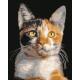 Живопись по номерам Кошка, 40x50, Hobruk, HS1283