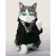 Живопись по номерам Модный кот, 40x50, Hobruk, U8076