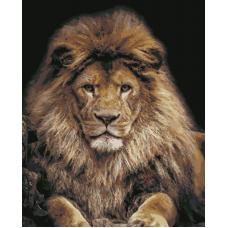 Живопись по номерам Король лев, 40x50, Hobruk, U8086