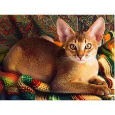 Мозаика стразами Абссинский кот, 30x40, полная выкладка, Алмазная живопись